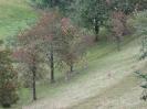 04.10.2012 Auf dem Mühlenweg
